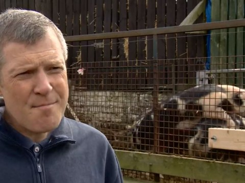 Watch: Scottish Lib Dems leader is upstaged by f*****g pigs during interview