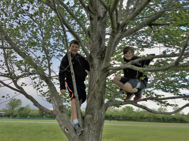 Mom writes 'permission slip' letting sons climb trees after adult chastises them