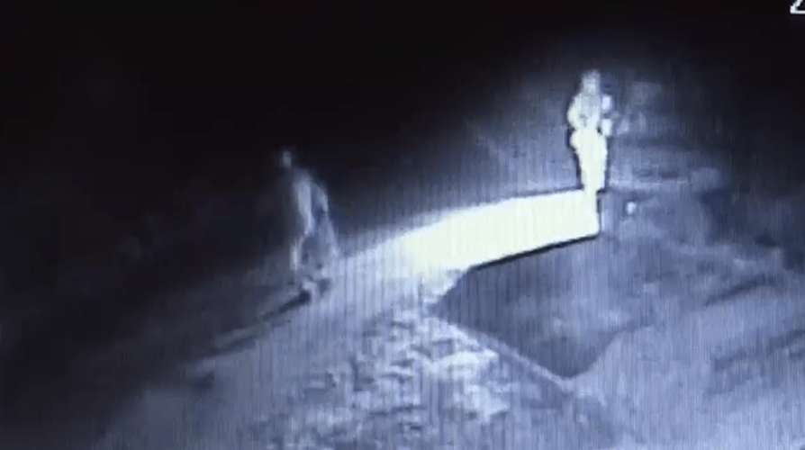 CCTV shows pet cat shot and stamped to death