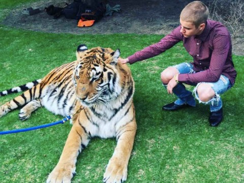 PETA slams Justin Bieber after posing with a chained tiger at engagement party
