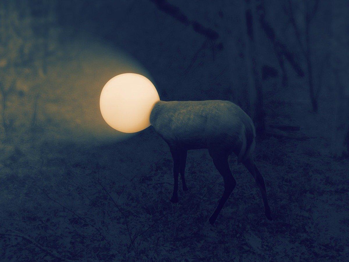 Deer gets head stuck in light globe and becomes a meme Credit: Reddit