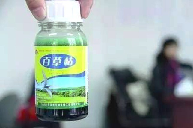 Pic shows: A bottle of Paraquat.nnA Chinese man was hospitalised for three weeks after discovering that his genitals had been slowly rotting because of a pair of poisoned underpants he was wearing.nnThe pants had reportedly been laced with toxic chemicals by none other than the man¿s own wife, with whom he had been quarrelling.nnReports from the city of Hangzhou, capital of East China¿s Zhejiang Province, said that the man, surnamed Zhang, in his 50s, did not catch on to his evil wife¿s scheme until he found his genitals putrefying.nnAfter being rushed to hospital, where he spent two weeks in the intensive care unit, investigators found that his underpants had been covered in paraquat - a toxic chemical widely used as a herbicide.nnZhang¿s wife, who allegedly wanted to get back at Zhang for an earlier argument, had reportedly soaked his pants in the substance, dried them in the sun, and given them to him to wear on their 30-year-old daughter¿s wedding day.nnThe paraquat seeped into his skin through his privates and started causing breathing difficulties, along with the disturbing rotting he discovered down under.nnHangzhou police arrested Zhang¿s wife and are now conducting further investigations into the matter, while the victim himself was discharged from hospital three weeks later.nnReports did not say whether Zhang would be filing for intentional injury against his wife.nn(ends)