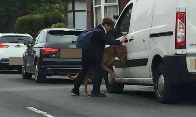 PIC FROM PRESTWICH PEOPLE/MERCURY PRESS (PICTURED: BRADLEY NORTH SAVING THE DOG HANGING OUT OF A VAN WINDOW) A heroic schoolboy came to the aid of a HANGING dog after the desperate pooch leapt through a glass window to escape a hot van. Bradley North, 13, from Prestwich, Gtr Manchester, was walking home from nearby Parrenthorn High School on Monday (May 16) when he noticed the French mastiff in distress in the hot van as temperatures soared in the sun. The terrified mutt was so relieved to see Bradley and his school pals that he summoned all his strength to jump through the window before his lead got caught and began to hang him, leaving him on the brink of death. Brave Bradley rushed to the stricken dog's aid after it passed out and managed to unbuckle his collar before slowly bringing the canine back to consciousness. SEE MERCURY COPY