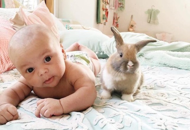baby and bunny