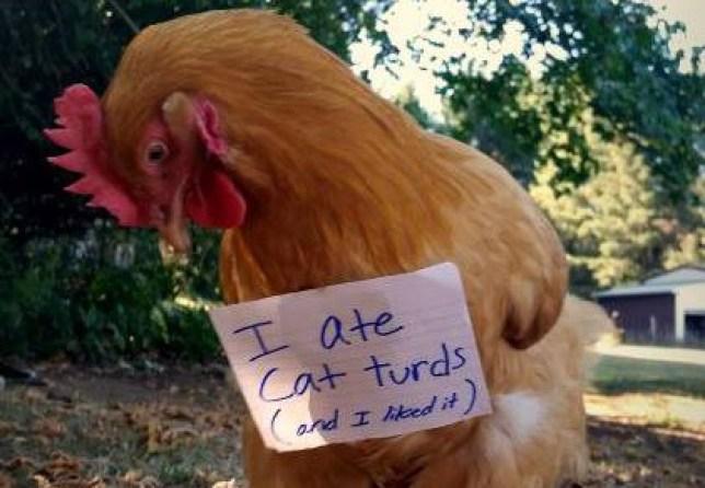 chicken shaming