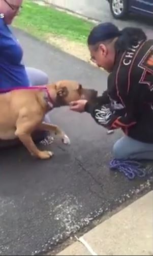 Dog reunited with owner two years after it was stolen