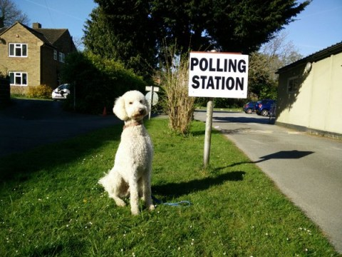 #DogsAtPollingStations: These animals love the democratic process