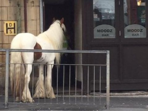 That 'horse walks in to a bar' joke actually happened