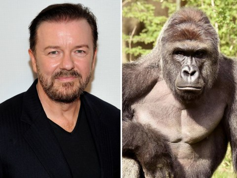 Celebrities join backlash over fatal shooting of Harambe the gorilla