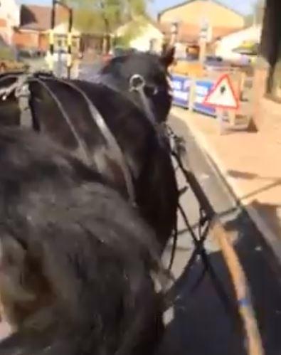 McDonald's horse