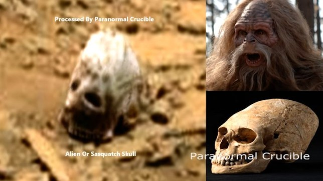 Strange artifact found by the curiosity rover, appears to resemble a large 'skull', potentially alien in nature is what people are saying about it, or that it could be the skull of the elusive 'sasquatch' Paranormal Crucible