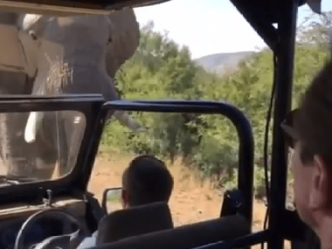 The dramatic moment Arnold Schwarzenegger was almost terminated by an elephant