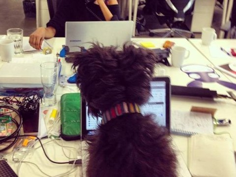 Health, happiness and productivity: Why every day should be Bring Your Dog To Work day