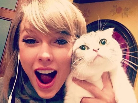 Calvin Harris 'is desperate for visitation rights to see Taylor Swift's cats Meredith and Olivia'