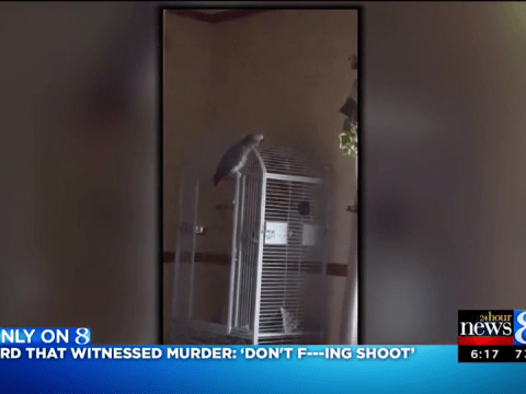 Parrot who 'witnessed murder' says 'don't f*****g shoot!'