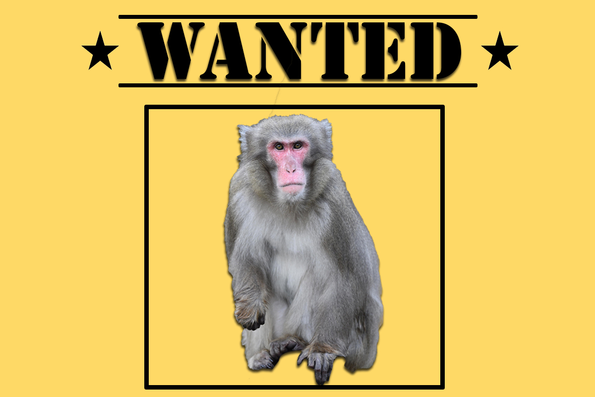 Fugitive monkey wanted after jewellery shop theft