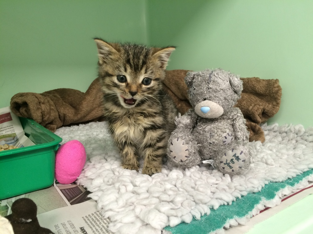 Homeless kitten makes full recovery after being mistaken for rat and hit over the head