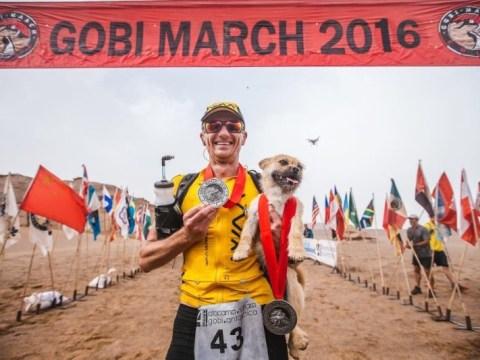 Marathon runner adopts stray dog who set pace for him in the Gobi desert