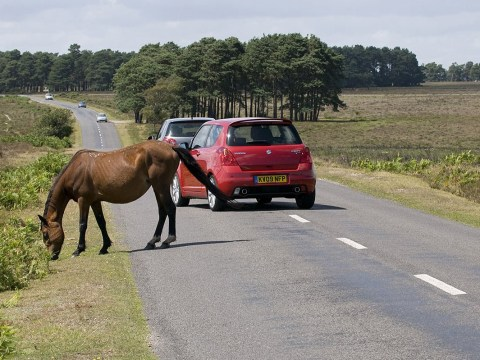 Teenager fighting for life after hitting New Forest pony