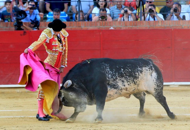 epa05418200 A picture made available on 10 July 2016 shows Spanish bullfighter Victor Barrio in action with his bull during a bullfight held on the occasion of the Feria del Angel in Teruel, Aragon, Spain, 09 July 2016. Barrio died due to the injures after being seriously gored by his third bull on 09 July.  EPA/ANTONIO GARCIA