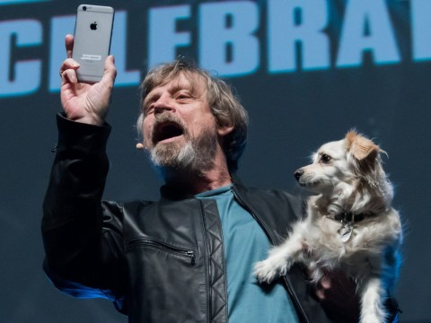 Mark Hamill and Carrie Fisher's dogs were denied entry to the Star Wars wrap party