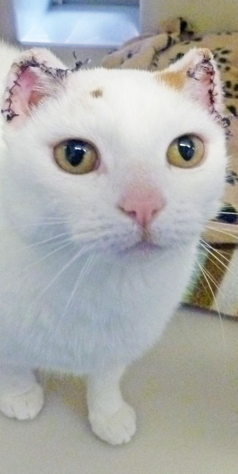 Pet Care How To Protect White Cats From Sunburn In Hot Weather Metro News