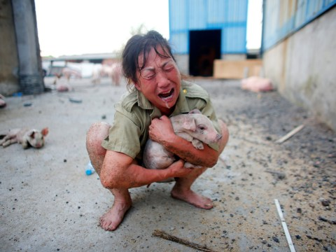 Farmer breaks down after pigs die in severe flooding