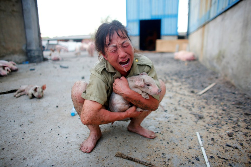 A woman cries as she holds a pig rescued from a flooded farm in Xiaogan, Hubei Province, China, July 22, 2016. REUTERS/Darley Shen