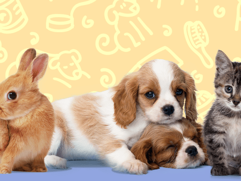 These are the unluckiest pet names in Britain apparently
