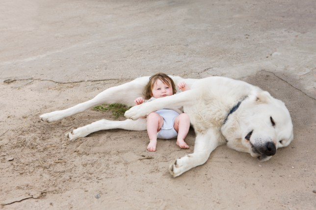 A baby lying with a dog