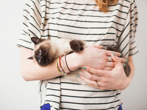 Turns out cat people really are more likely to be single than dog people