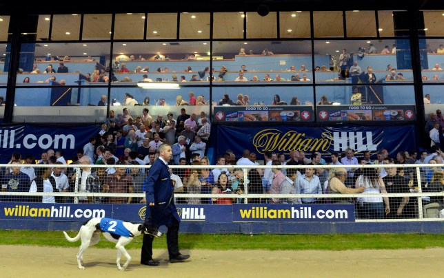 """File photo dated 26/05/12 of a greyhound being paraded before a race by a handler at the Wimbledon Greyhound Stadium, the last greyhound track in London, which faces extinction after mayor Sadiq Khan agreed the site should be used as a new stadium for football club AFC Wimbledon. PRESS ASSOCIATION Photo. Issue date: Monday August 22, 2016. Plans for the Plough Lane development outline a 20,000 seat stadium, 602 homes and a leisure centre which would all be """"of great benefit to Londoners and the wider community for generations to come"""". See PA story POLITICS Wimbledon. Photo credit should read: Rebecca Naden/PA Wire"""