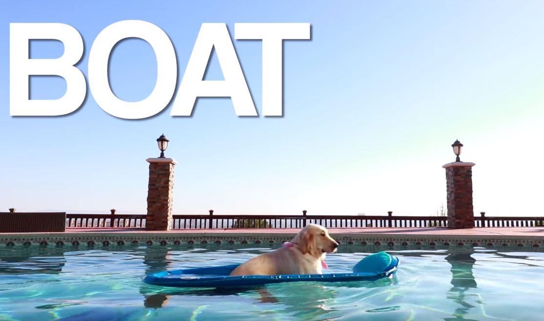 boat dog video by markiplier