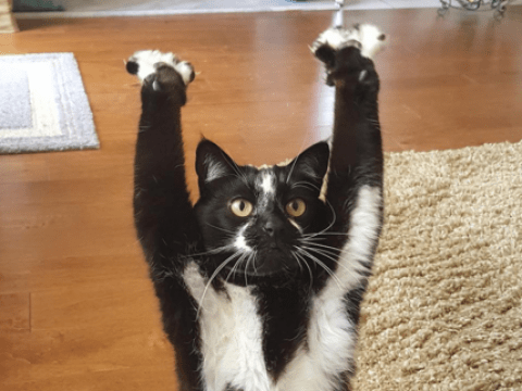 This cat keeps putting her paws in the air like she just don't care