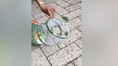 Little girl sets a butterfly free – and it's immediately eaten by a bird
