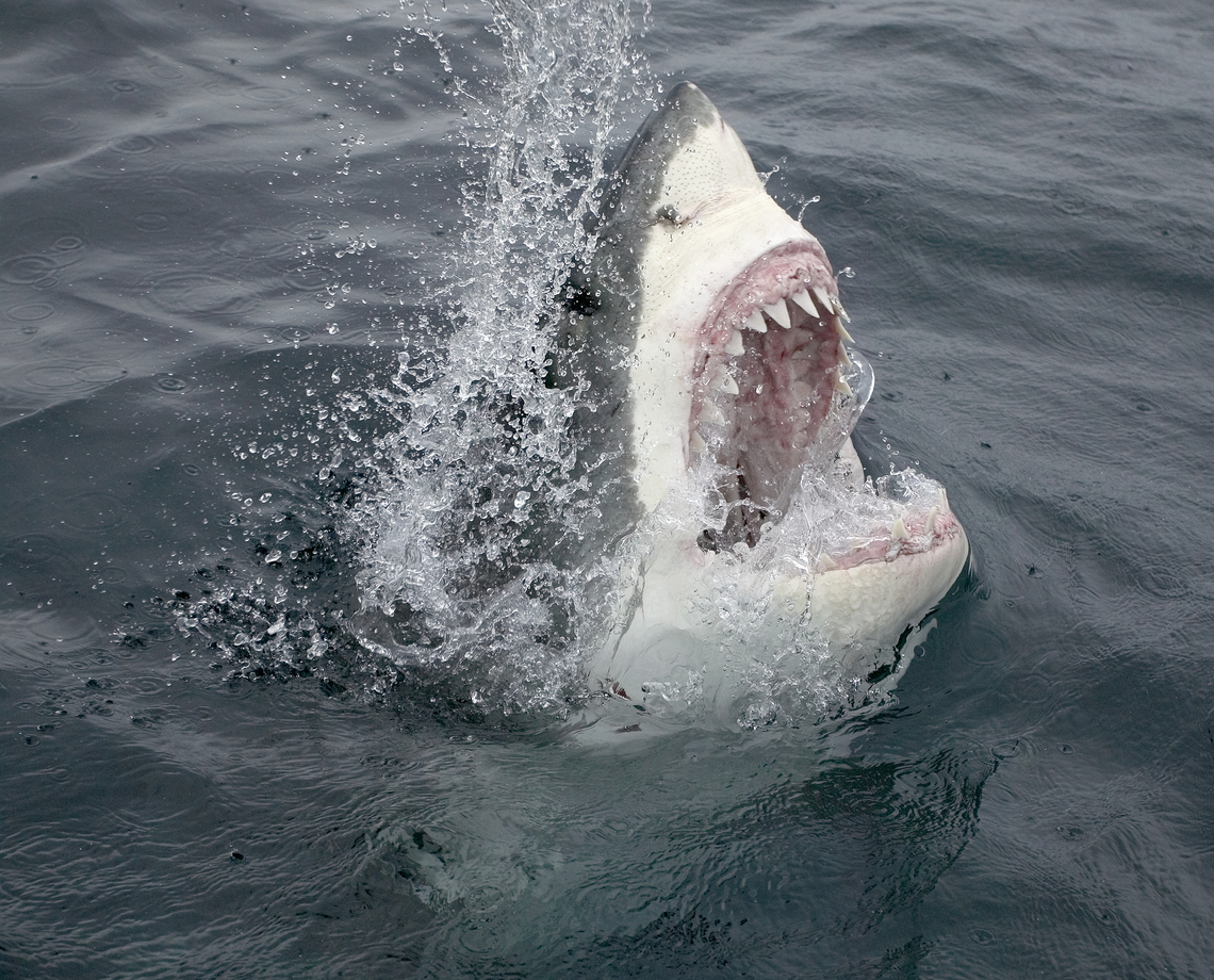 Apparently the reason we're all afraid of sharks is because of ominous background music