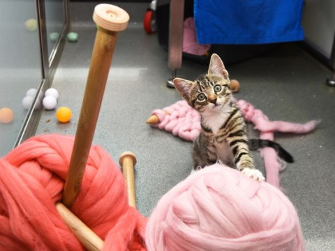 Just so you know, you can knit while hanging out with kittens at Battersea Dogs & Cats Home