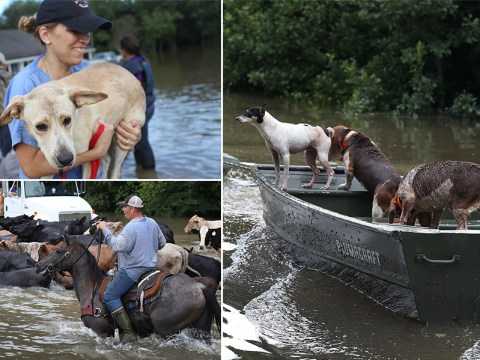Thousands of animals rescued from drowning in biblical Louisiana floods