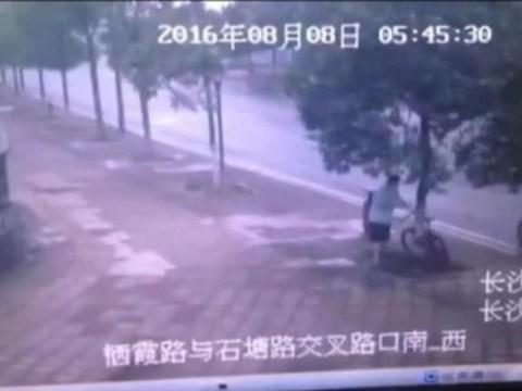 Man cuts down tree to steal locked-up bike