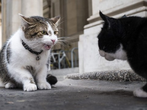 Cromwell the cat is coming to shake up Larry and Palmerston's feud