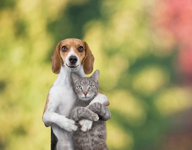 Illustration of cat and dog hugging