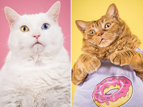 Man who photographs fat cats for a living is giving us some serious job envy