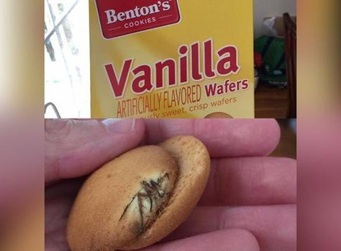 Spider found baked into cookie is your new worst nightmare