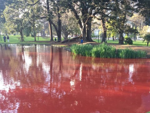 Some joker has dyed a lake red so it looks like a fishy crime scene