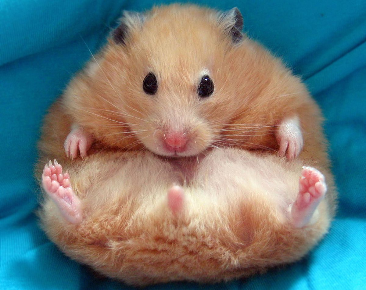 Man calls police on ex-girlfriend for overfeeding his hamster