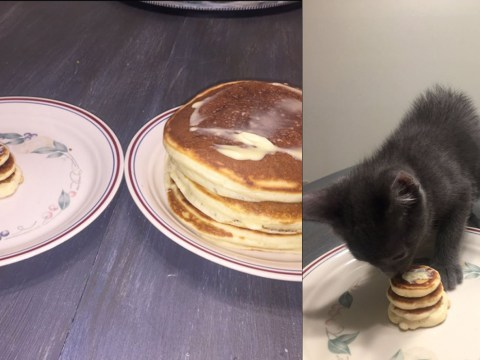 Man makes his kitten tiny pancakes to prove to girlfriend he can look after pets