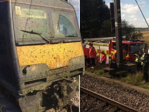 11 cows dead 15 missing after being hit by train full of Arsenal fans