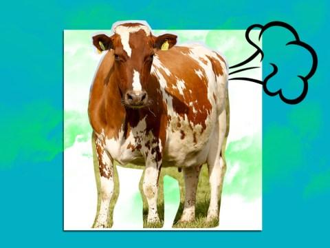 US state brings in groundbreaking 'cow fart regulations'