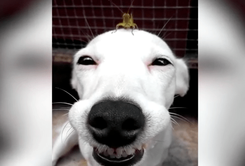 This dog is beside himself with happiness after making friends with a grasshopper