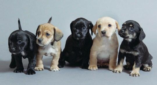 puppy-secrets-1